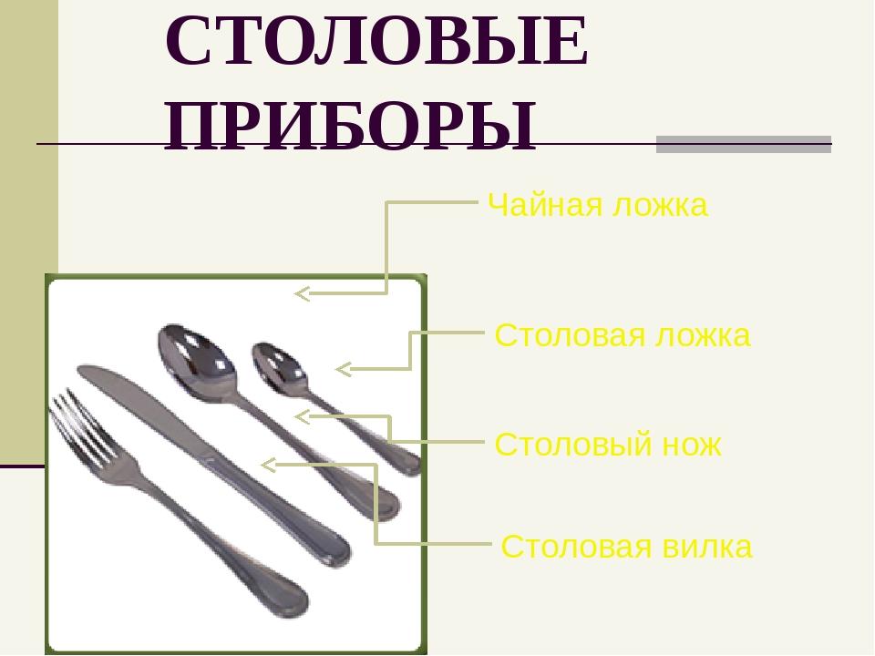 СТОЛОВЫЕ ПРИБОРЫ Чайная ложка Столовая ложка Столовый нож Столовая вилка