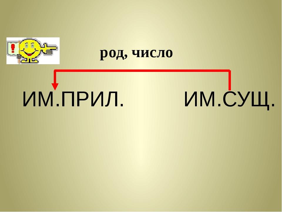 ИМ.ПРИЛ. ИМ.СУЩ. род, число