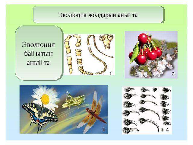 Эволюция жолдарын анықта Эволюция бағытын анықта