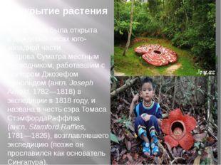 Открытие растения Раффлезия была открыта вдождевых лесахюго-западной части