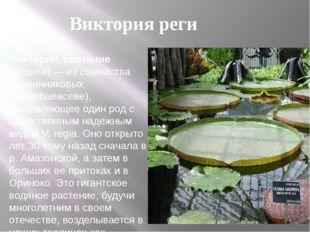 Виктория, растение (Victoria) — из семейства кувшинниковых (Nymphaeaceae), со