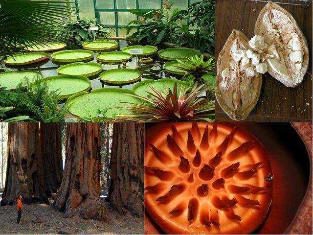 Удивительные растения мира