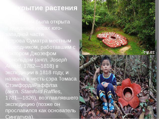 Открытие растения Раффлезия была открыта вдождевых лесахюго-западной части...