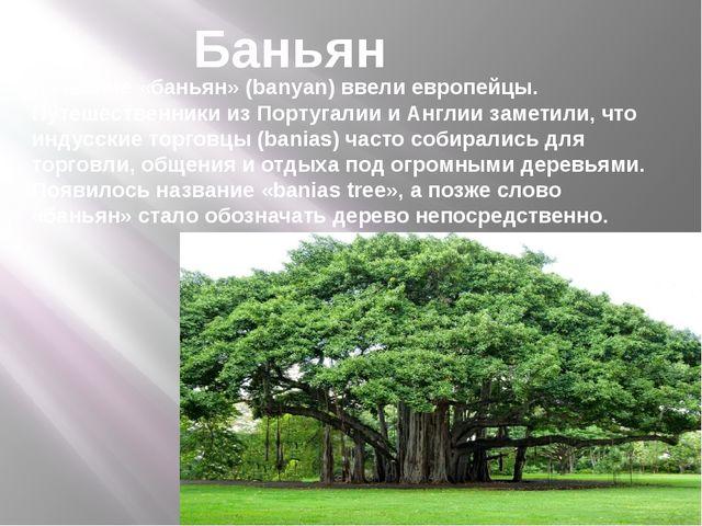 Название «баньян»(banyan) ввели европейцы. Путешественники из Португалии и А...