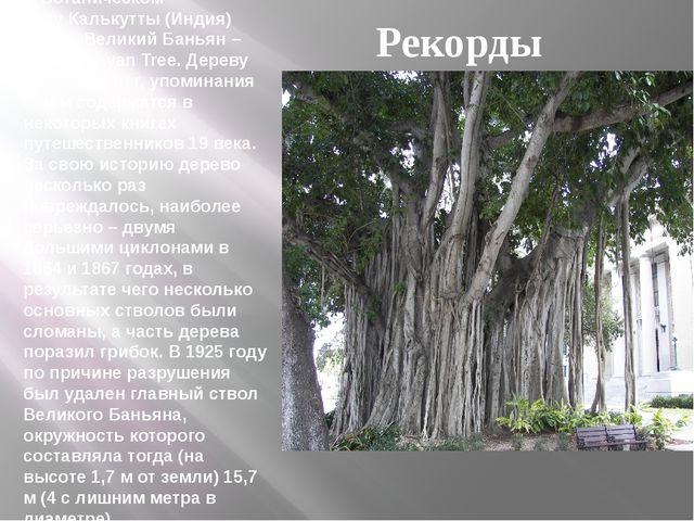 В Ботаническом садуКалькутты(Индия) растет Великий Баньян – Great Banyan Tr...