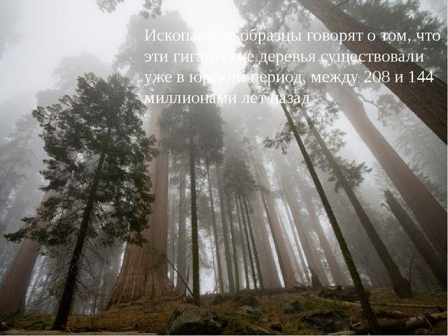 Ископаемые образцы говорят о том, что эти гигантские деревья существовали уж...