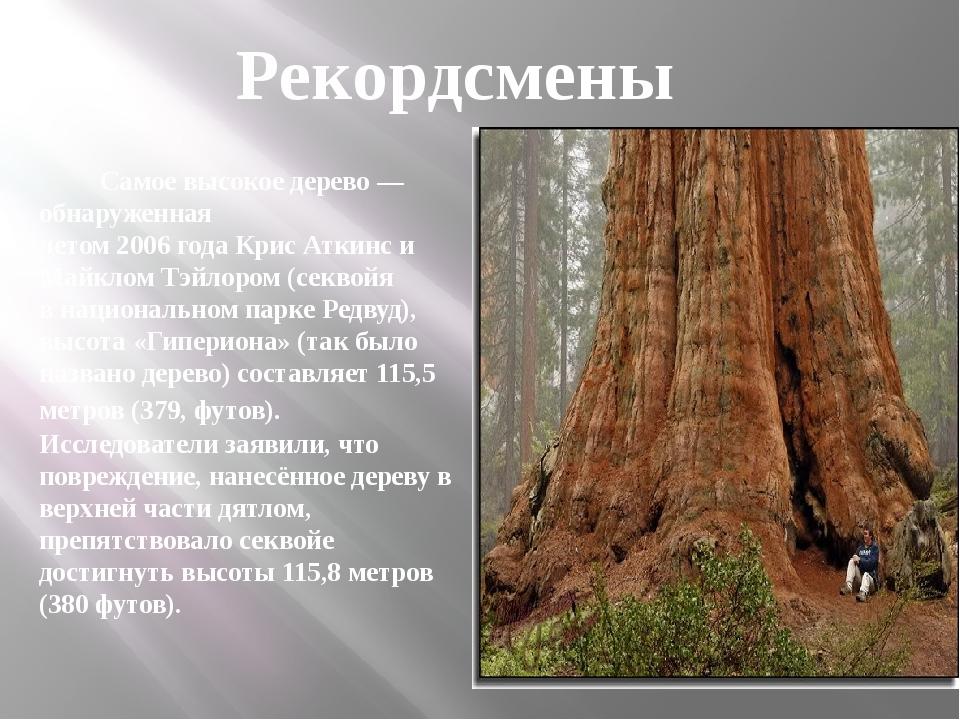Самое высокое дерево— обнаруженная летом2006годаКрис Аткинс и Майклом Тэ...