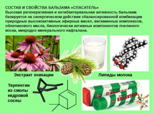 СОСТАВ И СВОЙСТВА БАЛЬЗАМА «СПАСАТЕЛЬ» Высокая регенеративная и антибактериал