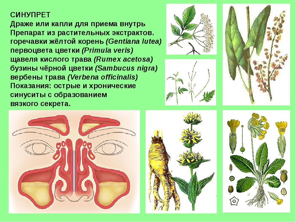 СИНУПРЕТ Драже или капли для приема внутрь Препарат из растительных экстракто...