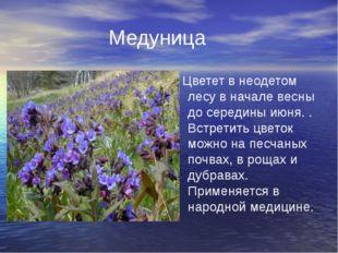 Медуница Цветет в неодетом лесу в начале весны до середины июня. . Встретить