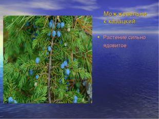 Можжевельник казацкий Растение сильно ядовитое