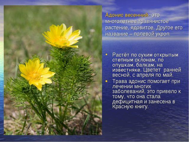 Адонис весенний - это многолетнее травянистое растение, ядовитое. Другое его...