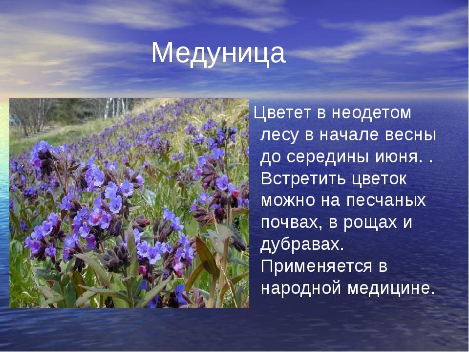 Медуница Цветет в неодетом лесу в начале весны до середины июня. . Встретить...