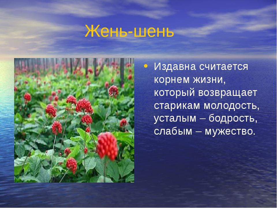 Жень-шень Издавна считается корнем жизни, который возвращает старикам молодос...