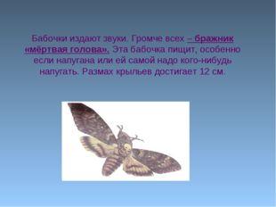 Бабочки издают звуки. Громче всех – бражник «мёртвая голова». Эта бабочка пищ