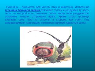 Гусеница – лакомство для многих птиц и животных. Испуганная гусеница большой