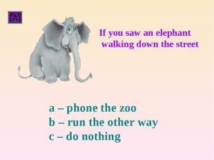 If you saw an elephant walking down the street a – phone the zoo b – run the