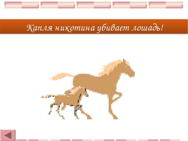 Капля никотина убивает лошадь!
