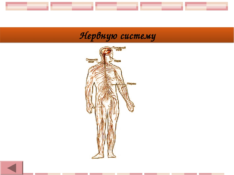Нервную систему