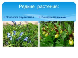 Редкие растения: Пролеска двулистная Венерин башмачок