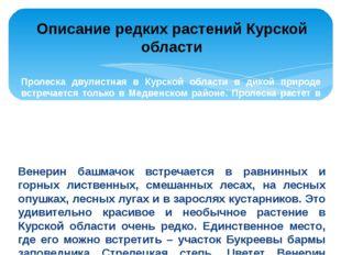 Пролеска двулистная в Курской области в дикой природе встречается только в Ме