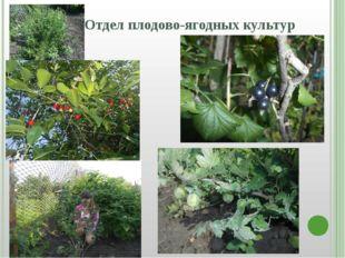 Отдел плодово-ягодных культур