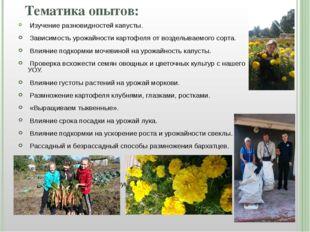 Тематика опытов: Изучение разновидностей капусты. Зависимость урожайности кар