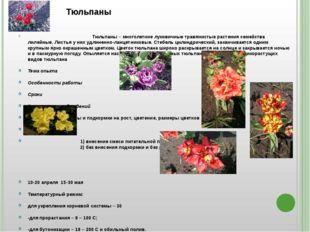 I. Тюльпаны