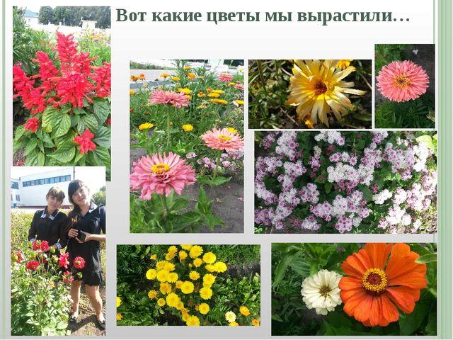 Вот какие цветы мы вырастили…