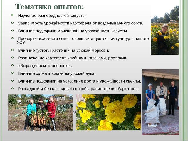 Тематика опытов: Изучение разновидностей капусты. Зависимость урожайности кар...