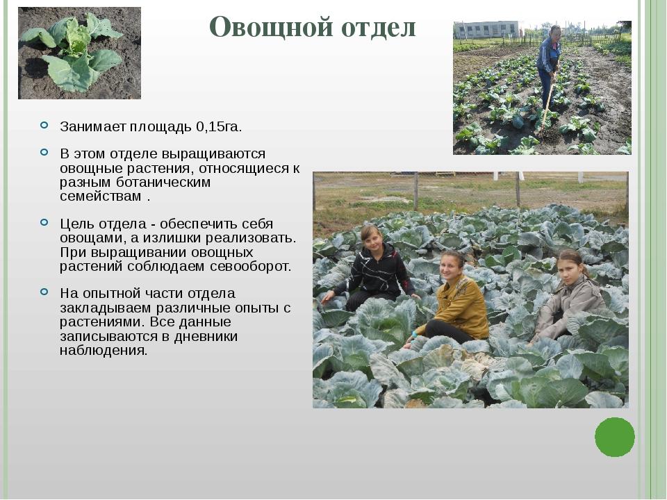 Овощной отдел Занимает площадь 0,15га. В этом отделе выращиваются овощные рас...