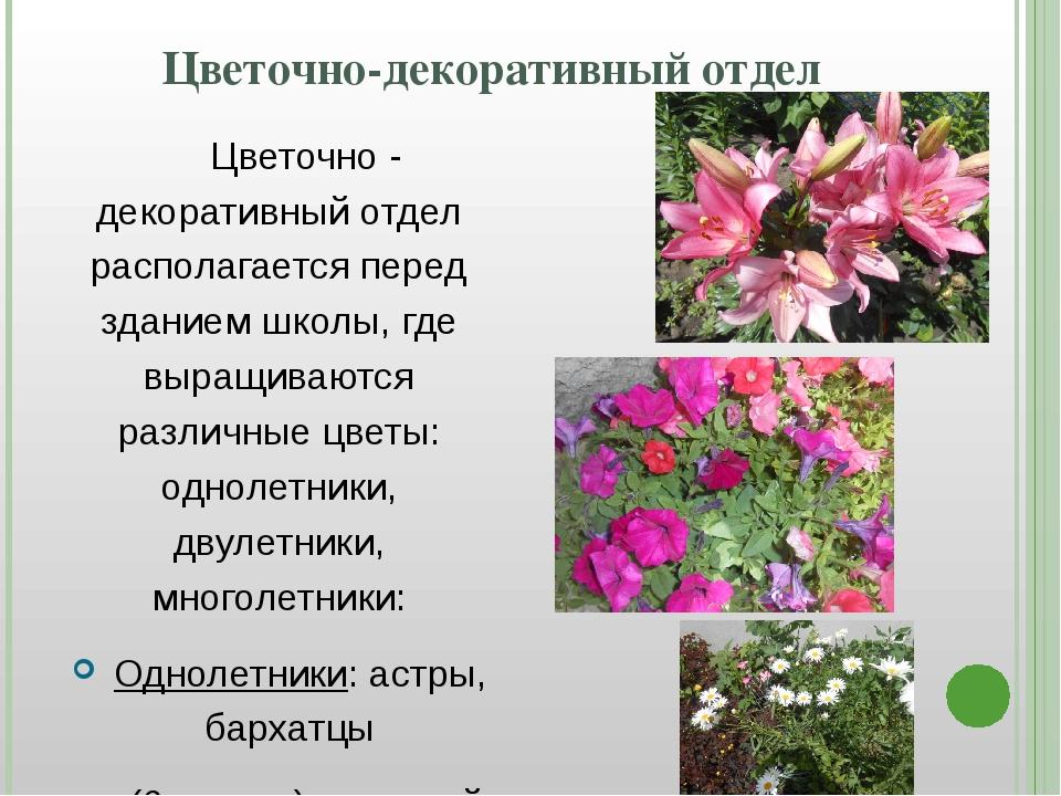 Цветочно-декоративный отдел Цветочно - декоративный отдел располагается пер...