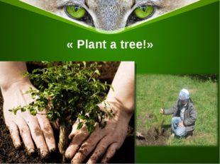 « Plant a tree!»