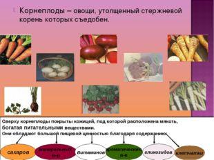 Корнеплоды – овощи, утолщенный стержневой корень которых съедобен. Сверху кор