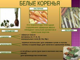 ПЕТРУШКА СЕЛЬДЕРЕЙ ПАСТЕРНАК Это корнеплоды благодаря содержанию эфирных масе