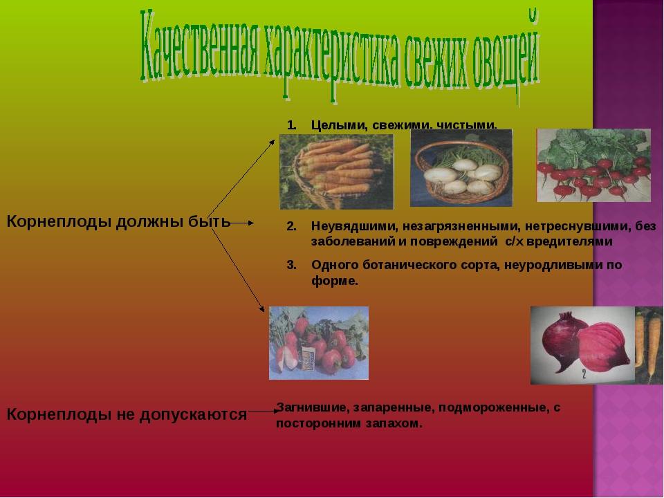 Корнеплоды должны быть Целыми, свежими, чистыми. Неувядшими, незагрязненными,...