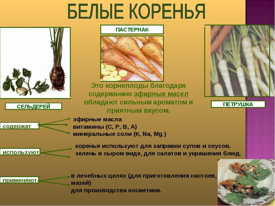 ПЕТРУШКА СЕЛЬДЕРЕЙ ПАСТЕРНАК Это корнеплоды благодаря содержанию эфирных масе...