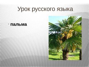Урок русского языка пальма