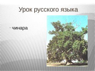Урок русского языка чинара