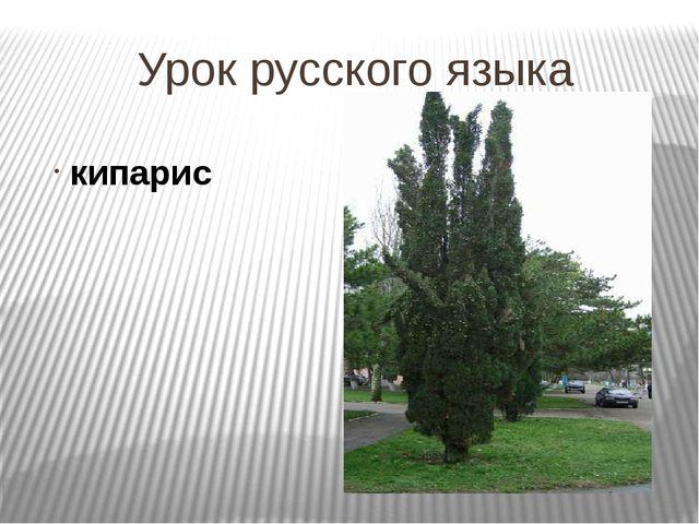 Урок русского языка кипарис