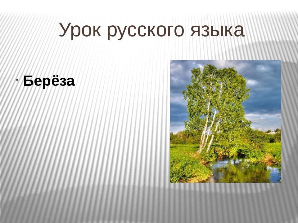 Урок русского языка Берёза