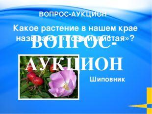 Княженика Какую ягоду называют «северной земляникой»? Растения 100 Welcome to