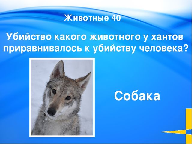 Этимология 20 Slide 3-Question/Answer (Cat1, $100) This slide is the first Q...