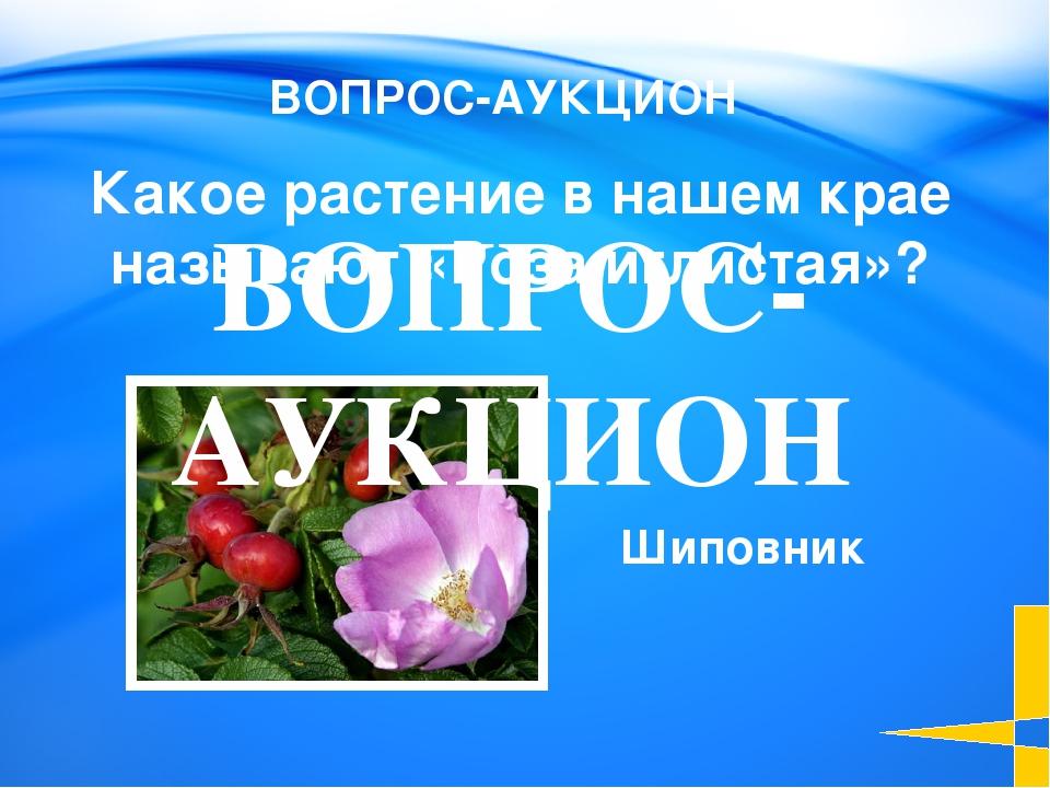 Княженика Какую ягоду называют «северной земляникой»? Растения 100 Welcome to...