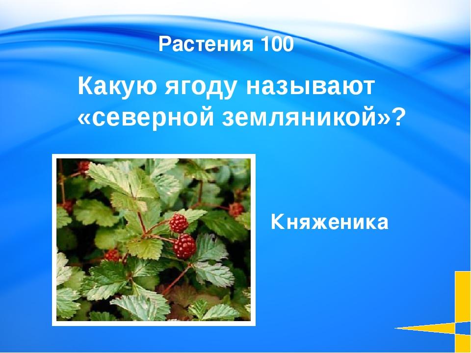 Название этого города означает чистая вода Этимология 100 Пыть-ях Welcome to...