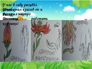 У нас в саду расцвёл цветок, Чтоб стал красив он и высок, Раскрыл наутро лепе