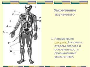 Рассмотрите рисунок. Назовите отделы скелета и основные кости обозначенные ук