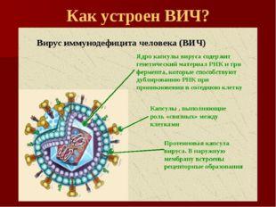 Как устроен ВИЧ?