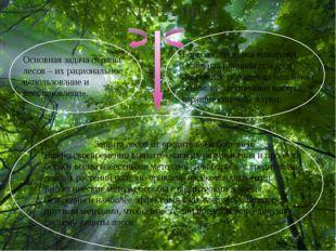 ОХРАНА ЛЕСА Основная задача охраны лесов – их рациональное использование и в