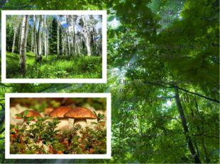 Есть просто храм, Есть храм науки, А есть еще природы храм, С лесами, тянущи
